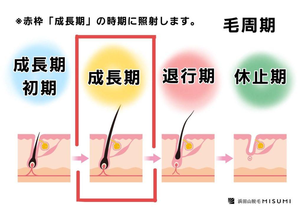 光脱毛の毛周期